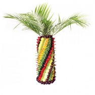 Пальма макси